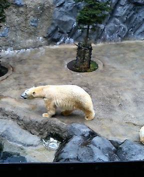 旭山Zooは迫力があって楽しい